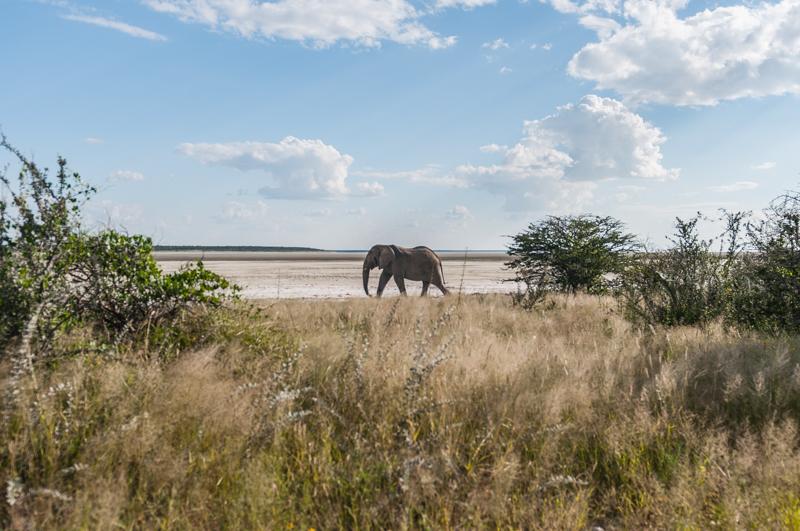 Zaraz po wjechaniu do parku mieliśmy okazję zobaczyć słonia