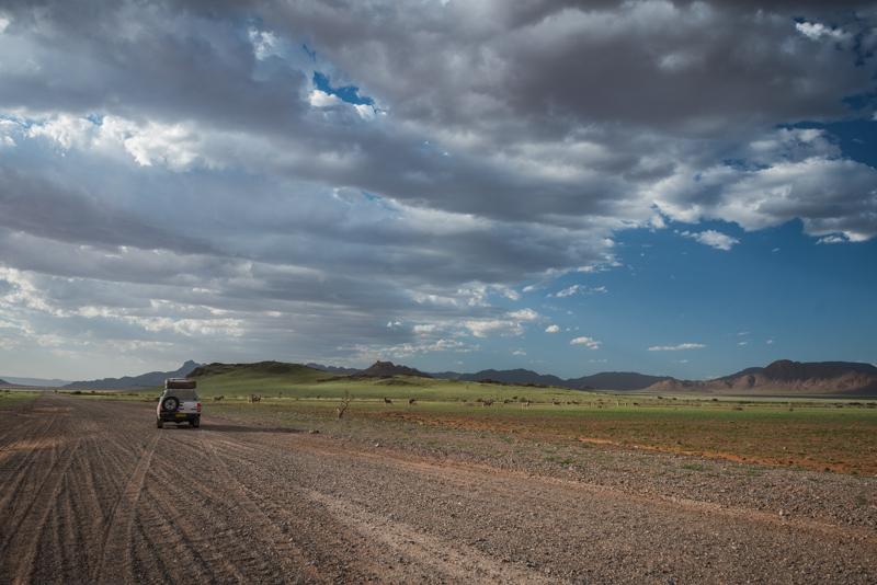 Przystanek przy zebrach w drodze na pustynię Namib