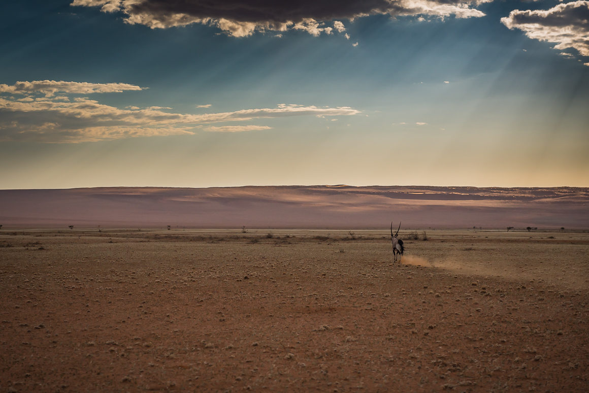 Namib Naukluft Park – jeden z bardziej dzikich regionów kraju.