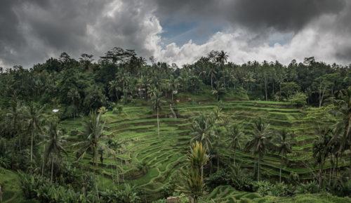 Bali w 7 dni