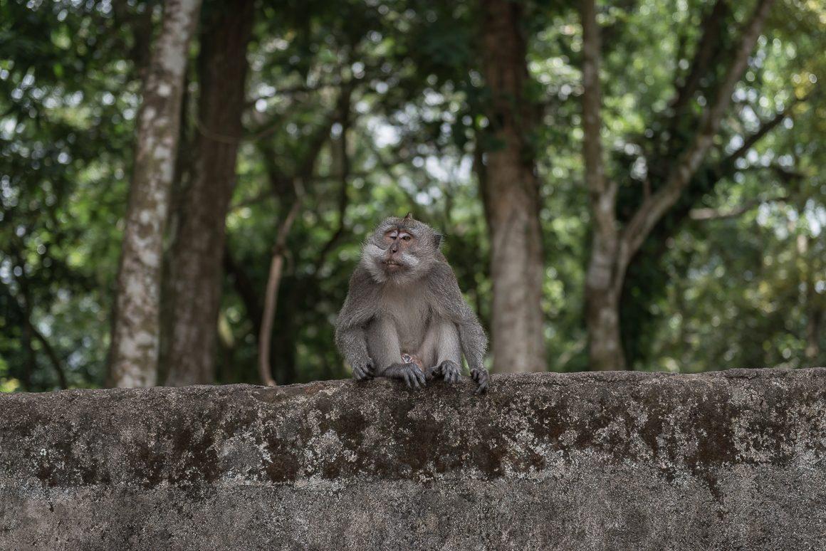 Przyznacie, że ta małpa ma wyjątkowo kretyński wyraz twarzy.