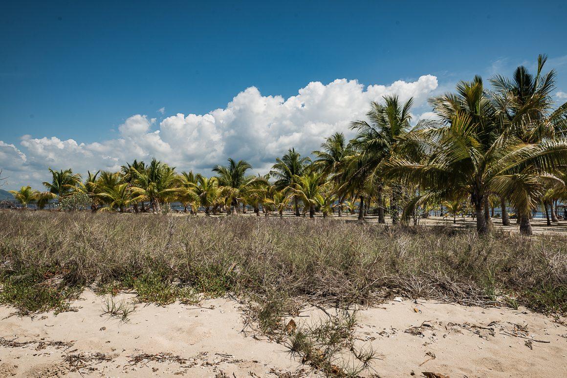 Palmy na wyspie