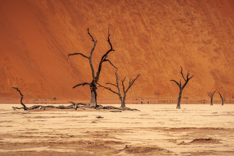 Deadvlei na pustyni Namib